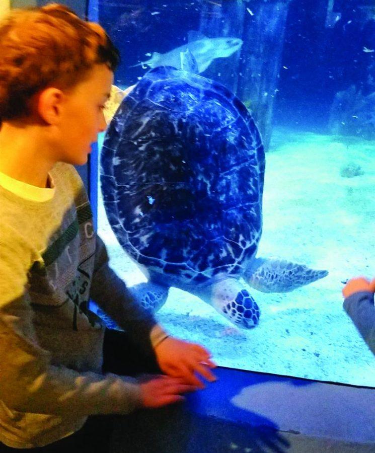 The authors at Mystic Aquarium.